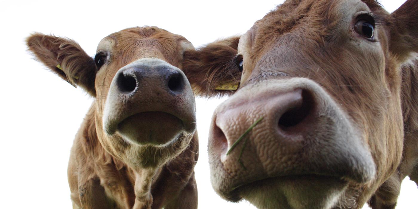 No. 24: Dairy