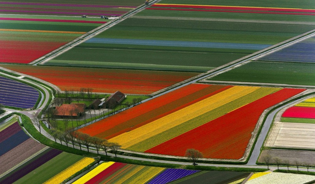Dutch spring tulip fields netherlands