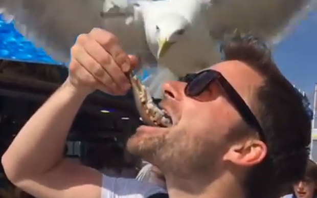 Amazing Dutch seagull shows love for herring