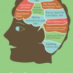 dutch_brain_new